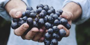 Vins bio, biodynamie et sans sulfites